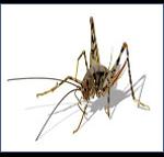 Camel-Crickets-Pest-Control