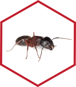 Pest Control, Greenville, NC