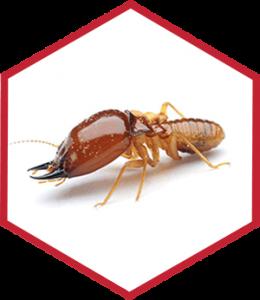 Termite Control, Greenville, NC